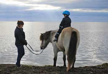 træning af islandske heste med pat parelli