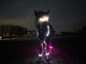 LED-hest-lyssæt