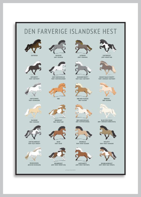 Den farverige islandske hest